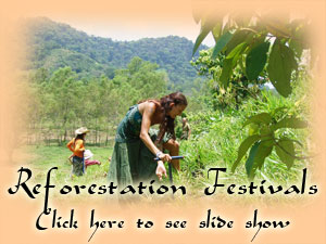 Reforestation Festivals